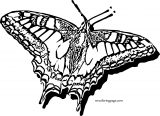 Butterfly Coloring Page Wecoloringpage 13