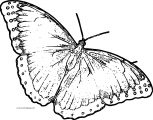 Butterfly Coloring Page Wecoloringpage 132