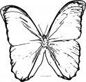 Butterfly Coloring Page Wecoloringpage 136
