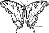 Butterfly Coloring Page Wecoloringpage 14