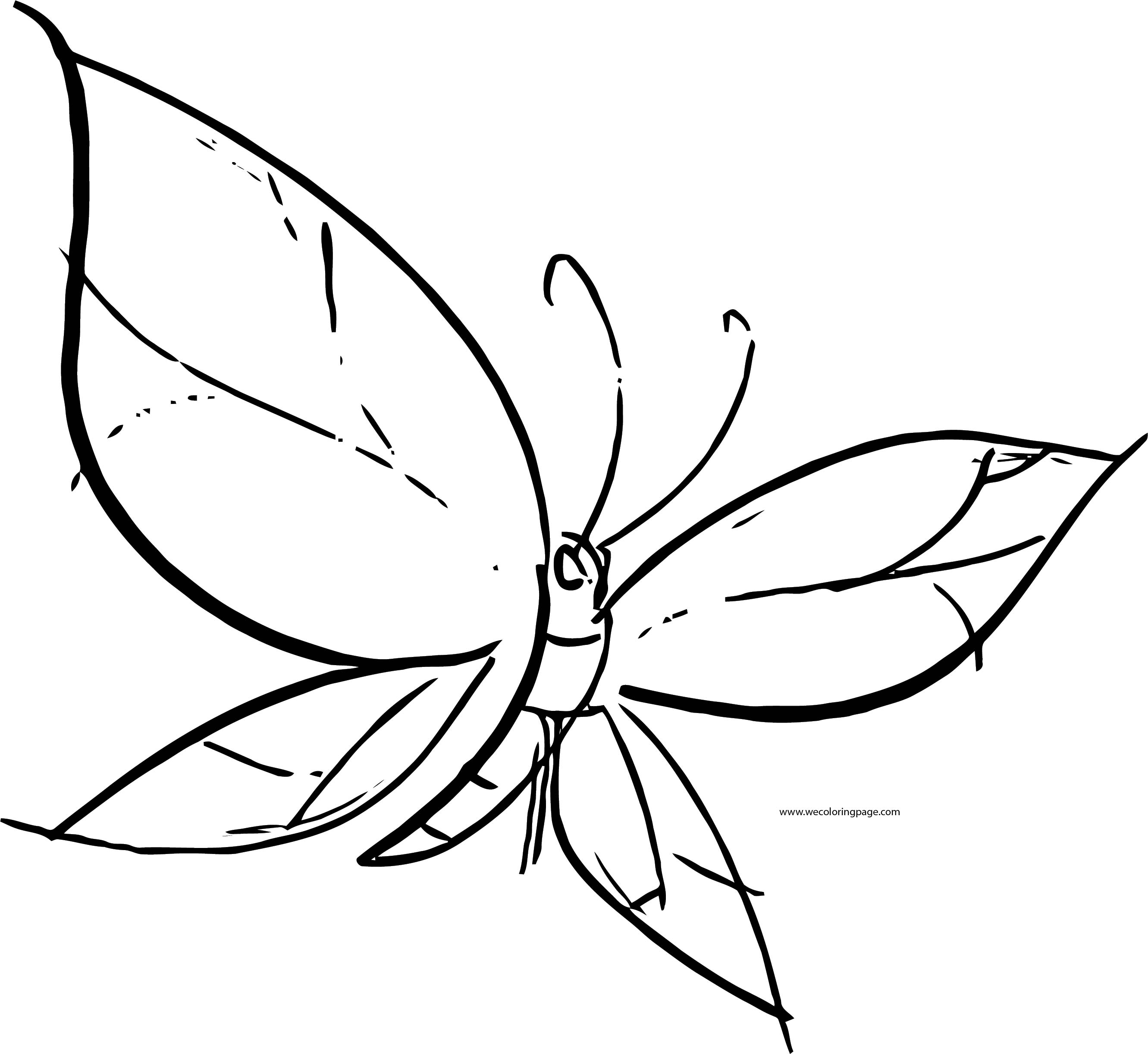 Butterfly Coloring Page Wecoloringpage 147