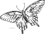 Butterfly Coloring Page Wecoloringpage 155
