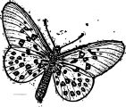 Butterfly Coloring Page Wecoloringpage 159