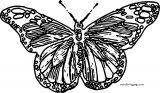 Butterfly Coloring Page Wecoloringpage 16
