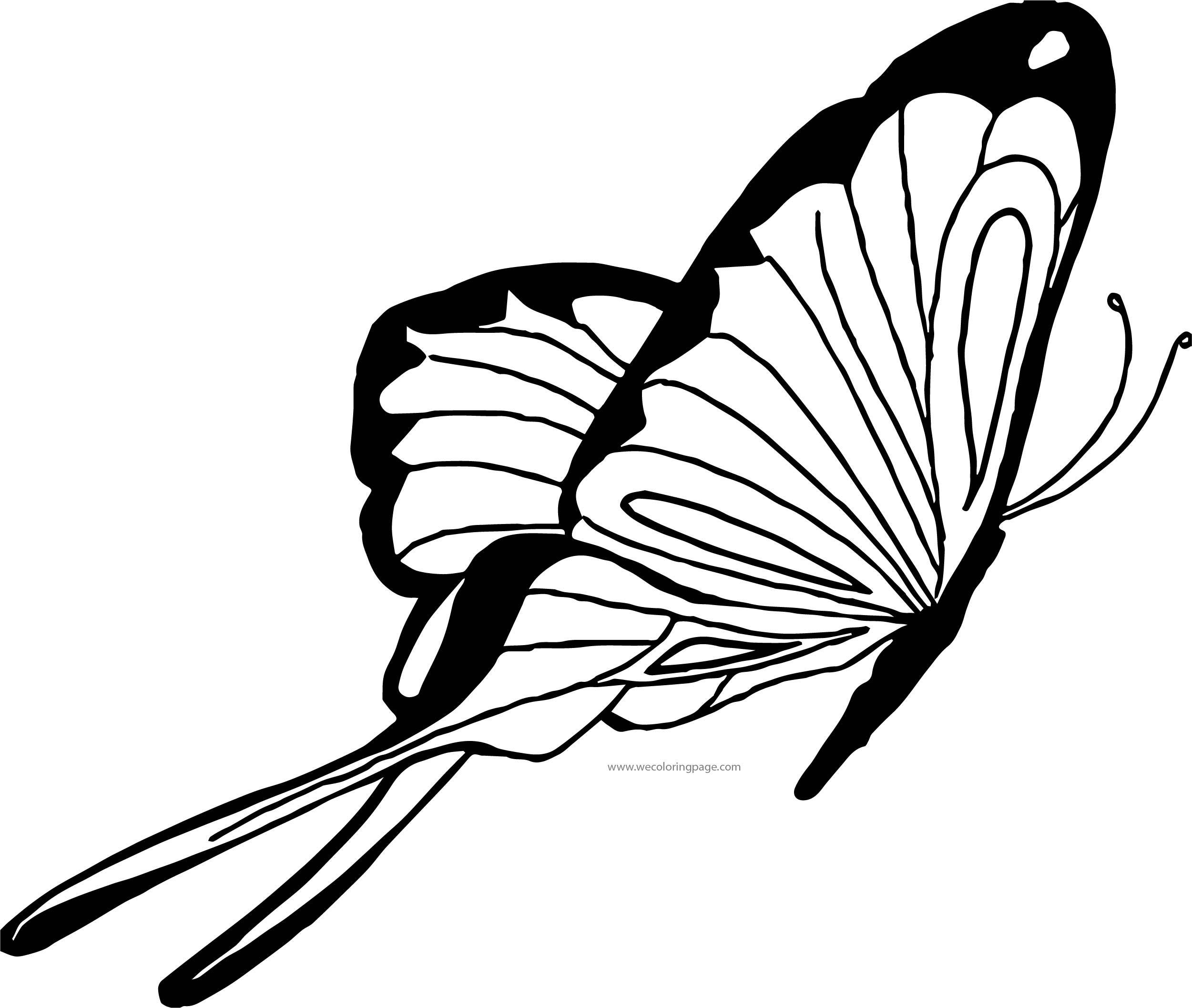 Butterfly Coloring Page Wecoloringpage 164