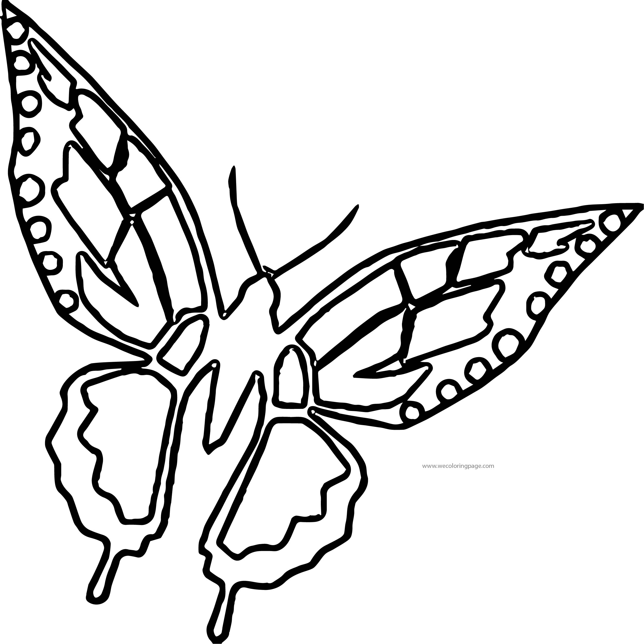 Butterfly Coloring Page Wecoloringpage 165