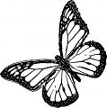 Butterfly Coloring Page Wecoloringpage 168