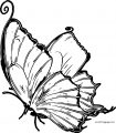 Butterfly Coloring Page Wecoloringpage 17