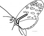Butterfly Coloring Page Wecoloringpage 171