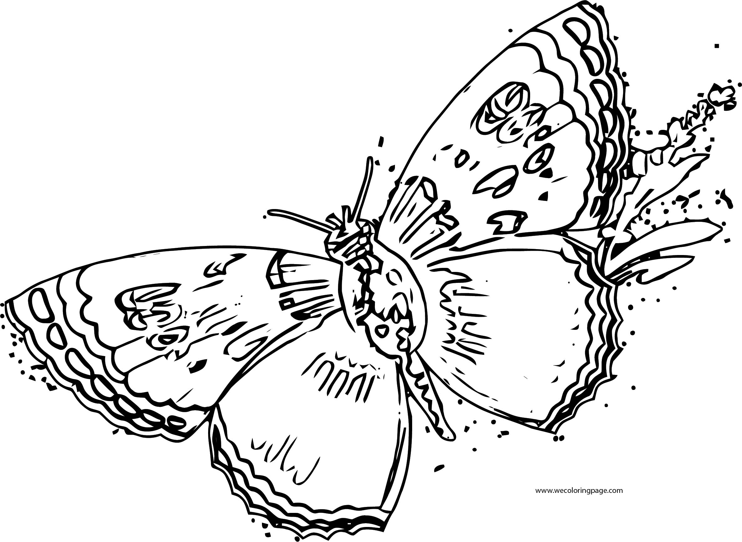 Butterfly Coloring Page Wecoloringpage 173