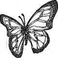 Butterfly Coloring Page Wecoloringpage 179