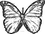 Butterfly Coloring Page Wecoloringpage 181