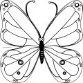 Butterfly Coloring Page Wecoloringpage 190