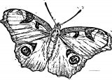 Butterfly Coloring Page Wecoloringpage 198