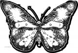 Butterfly Coloring Page Wecoloringpage 201