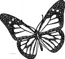 Butterfly Coloring Page Wecoloringpage 203