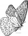 Butterfly Coloring Page Wecoloringpage 205