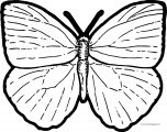 Butterfly Coloring Page Wecoloringpage 208