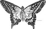 Butterfly Coloring Page Wecoloringpage 211