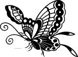 Butterfly Coloring Page Wecoloringpage 212