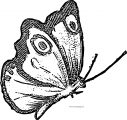 Butterfly Coloring Page Wecoloringpage 213