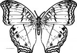 Butterfly Coloring Page Wecoloringpage 215