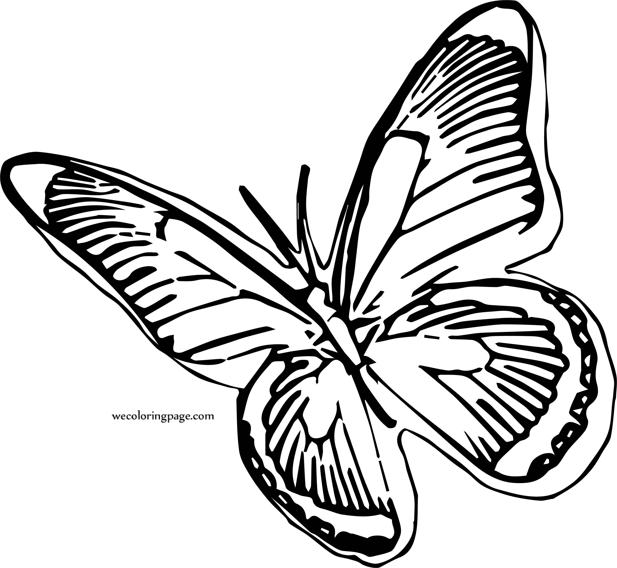 Butterfly Coloring Page Wecoloringpage 218