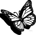 Butterfly Coloring Page Wecoloringpage 224