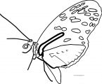 Butterfly Coloring Page Wecoloringpage 225