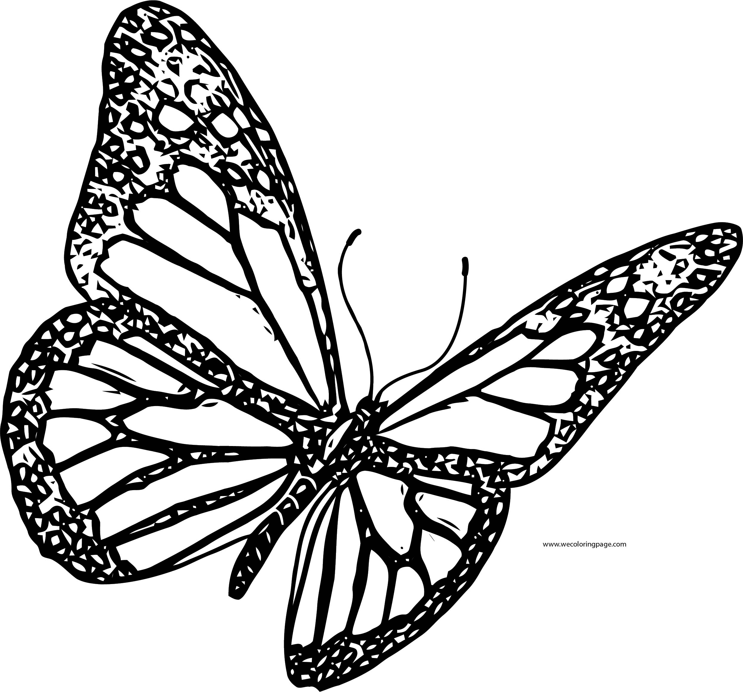 Butterfly Coloring Page Wecoloringpage 227