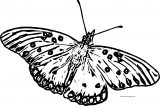 Butterfly Coloring Page Wecoloringpage 229