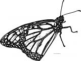 Butterfly Coloring Page Wecoloringpage 230