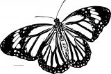 Butterfly Coloring Page Wecoloringpage 231