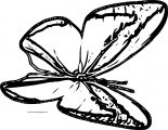 Butterfly Coloring Page Wecoloringpage 232