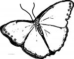 Butterfly Coloring Page Wecoloringpage 233