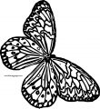 Butterfly Coloring Page Wecoloringpage 235