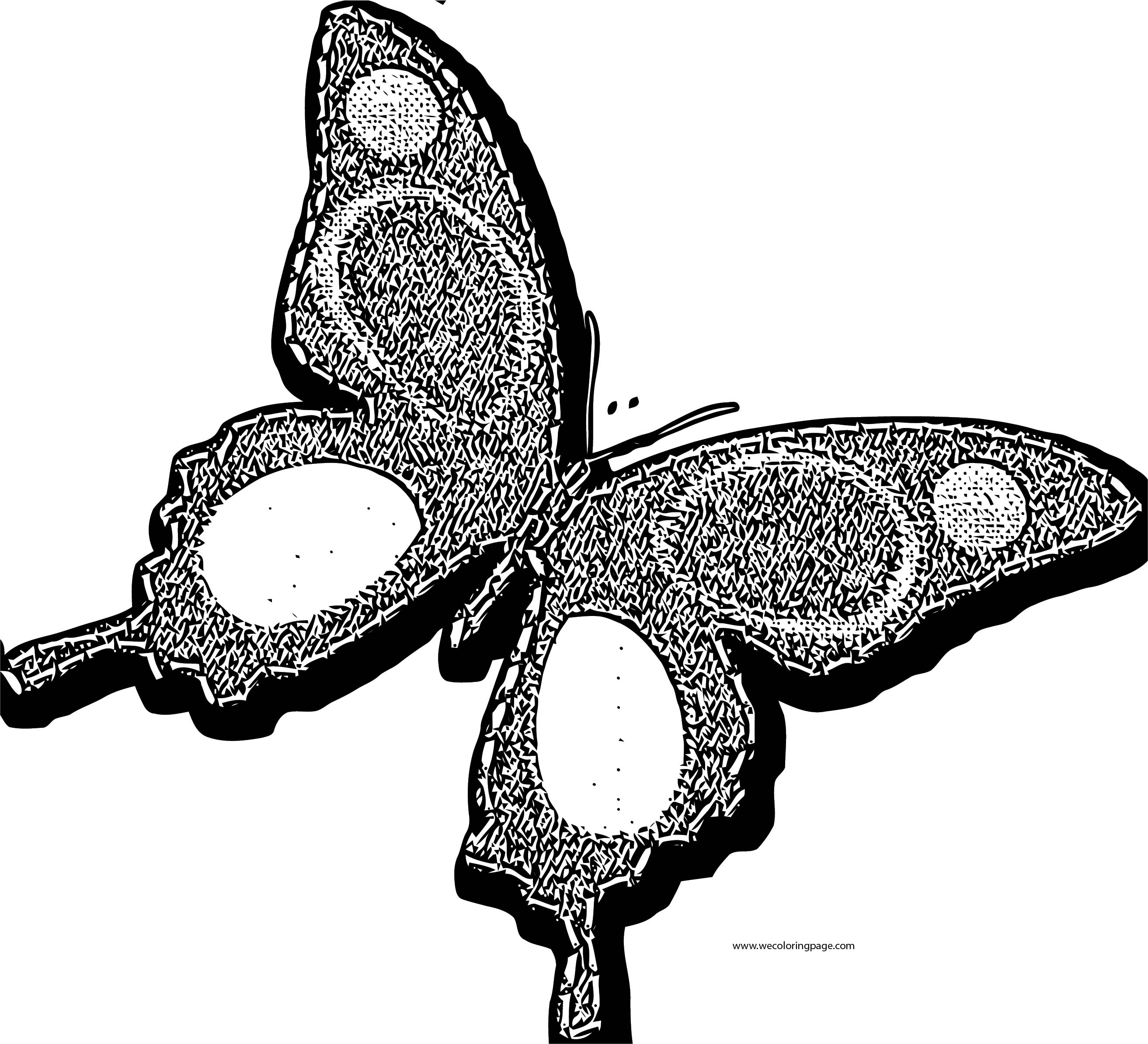 Butterfly Coloring Page Wecoloringpage 243