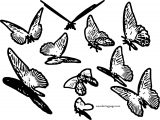 Butterfly Coloring Page Wecoloringpage 25