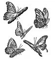 Butterfly Coloring Page Wecoloringpage 254