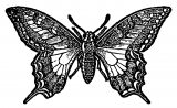 Butterfly Coloring Page Wecoloringpage 255
