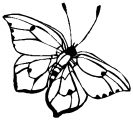 Butterfly Coloring Page Wecoloringpage 257