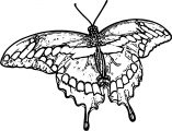Butterfly Coloring Page Wecoloringpage 258