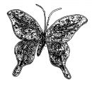 Butterfly Coloring Page Wecoloringpage 260