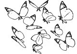 Butterfly Coloring Page Wecoloringpage 263