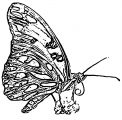 Butterfly Coloring Page Wecoloringpage 269