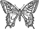 Butterfly Coloring Page Wecoloringpage 270