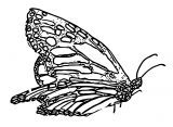 Butterfly Coloring Page Wecoloringpage 271