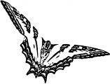 Butterfly Coloring Page Wecoloringpage 272