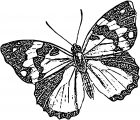 Butterfly Coloring Page Wecoloringpage 273
