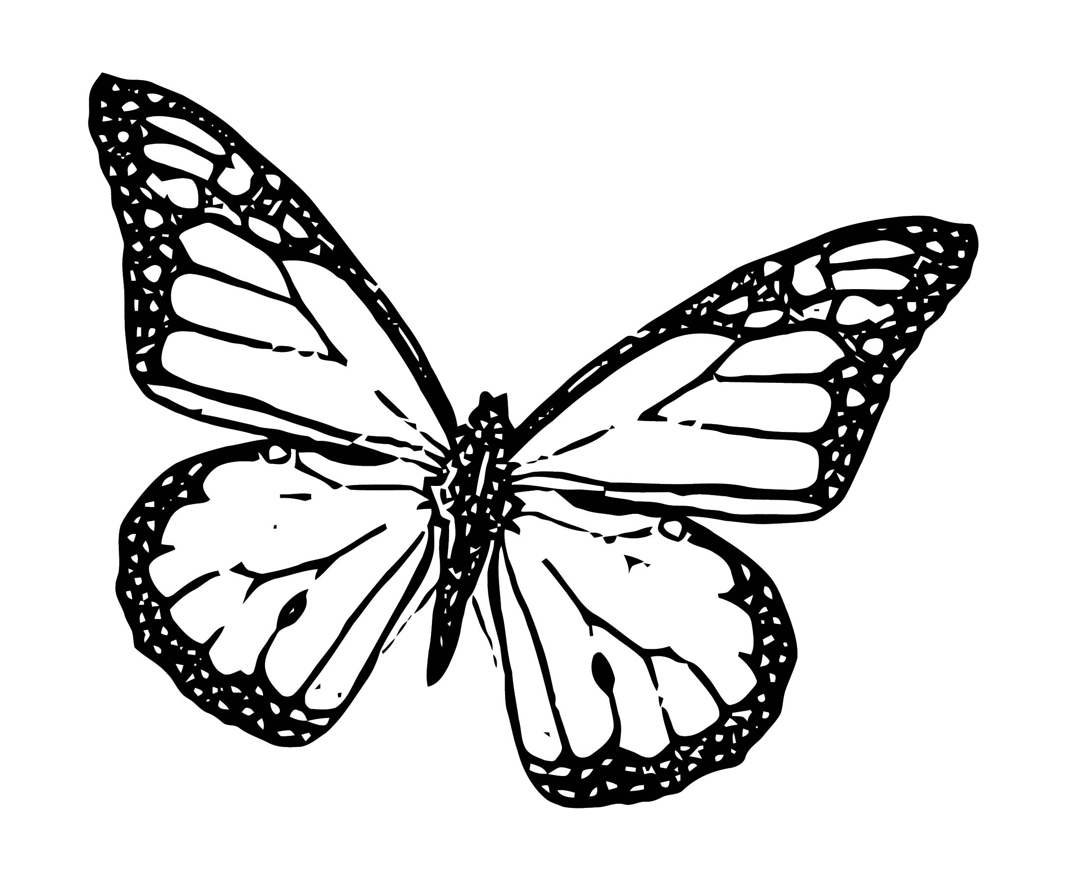 Butterfly Coloring Page Wecoloringpage 274